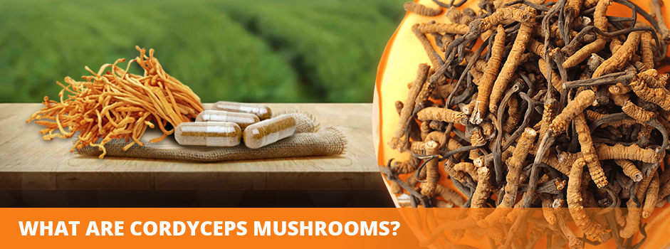 What are Cordyceps Mushrooms?